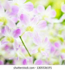 Beautiful pale pink orchid flowers in tropical garden