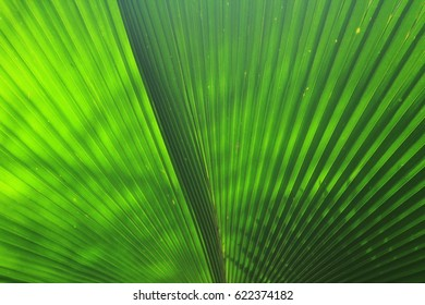 beautiful palm leave of tree in sunlight