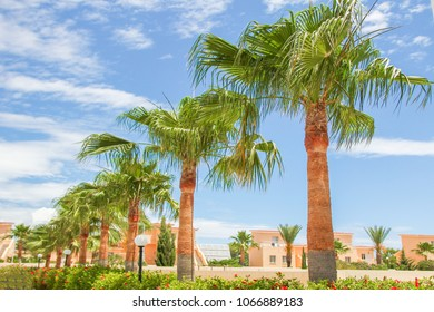 beautiful palm tree near the sea shore on nature background