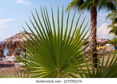 Beautiful palm tree on the beach
