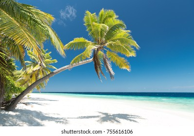 beautiful palm tree on an untouched tropical beach