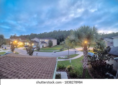 beautiful palm tree and sunshine at sun set of Florida