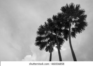 Beautiful palm tree under the sky