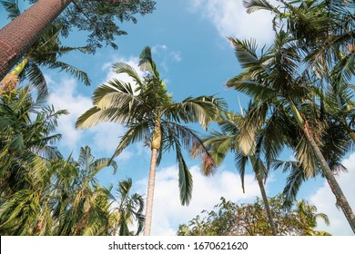 Beautiful palm trees against the blue sky in the park.