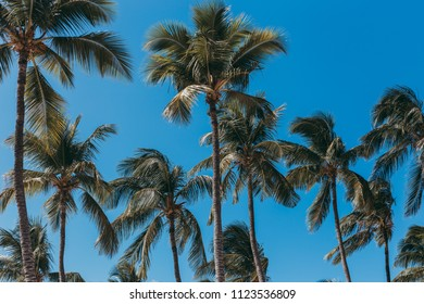 Beautiful palm trees with clear blue sky