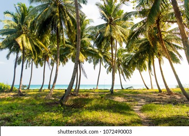 beautiful palm trees with a lush crown against the sea and blue sky. . Vacation concept. Palm grove on the island. Coastal lawn under a palm tree. Wallpaper palm trees with large green leaves