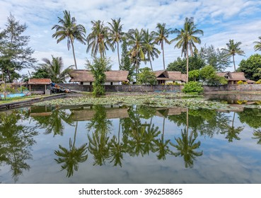 Beautiful palm trees on the shore of the lagoon with blossoming lotuses in the village of Candidasa - Bali, Indonesia
