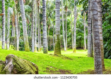 Beautiful palm trees park on Tenerife
