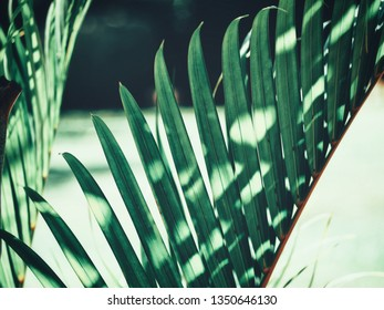 Beautiful of palm tropical leaves