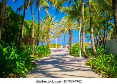 Beautiful Palm walkway to the beach, Miami Beach, Florida. USA.