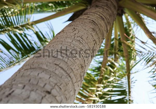 beautiful palms coconut tree bottom view