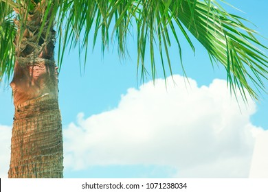 beautiful palms on the seashore at the pool on nature background