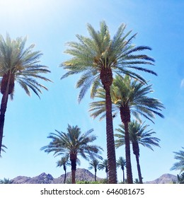 Beautiful Palms Trees of Palm Springs