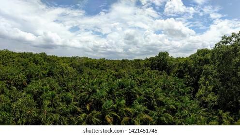 A beautiful Panaromic view of the Sundarbans