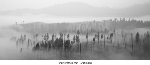 Beautiful panorama of a forest covered by low clouds in Yosemite National Park, California.
