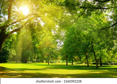 Beautiful panorama landscape with sun and forest and meadow at sunrise. Sun rays shine through trees.