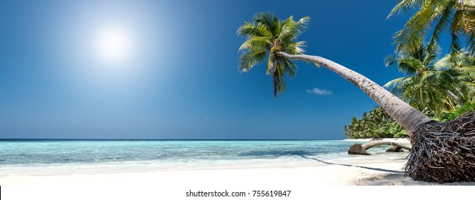 beautiful panorama with palm trees on an untouched tropical beach