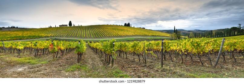Beautiful Panorama of Tuscan Vineyards during autumn season. rows of yellow vineyards in Chianti region near Florence. Italy