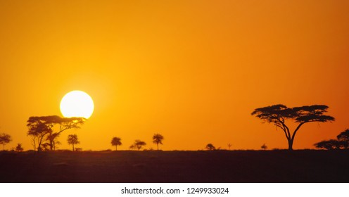 Beautiful panoramic african sunset in the Serengeti Park savannah plains, Tanzania, Africa with silhouettes of acacia trees and the sun setting on the horizon. Wild safari landscape.
