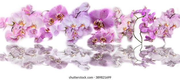 Beautiful panoramic collage background of pink orchid flowers. Phalaenopsis orchid flower is like a tropical butterfly.