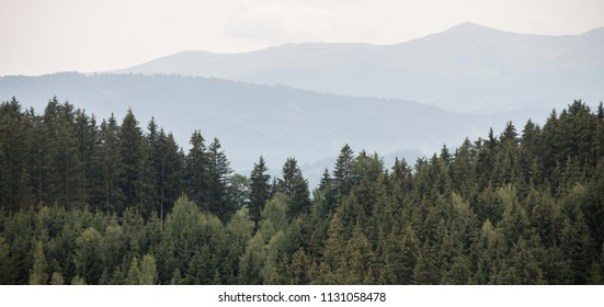 Beautiful panoramic coniferous forest - Firs, larches. Vintage look. Styria mountains, Austria