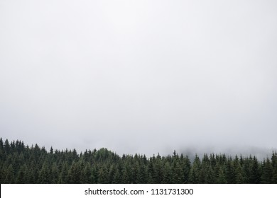 Beautiful panoramic coniferous forest. Firs, larches.  Copy space for text. White clouds. Styria mountains, Austria