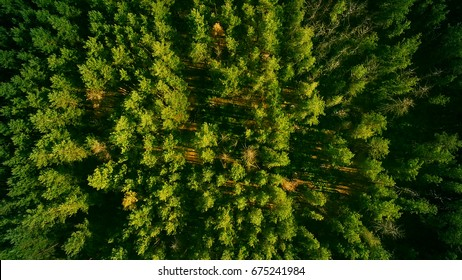 Beautiful panoramic photo over the tops of pine forest. Aerial view. From above.