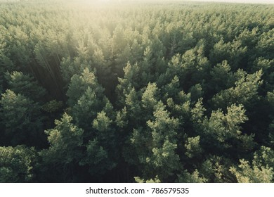 Beautiful panoramic photo over the tops of pine forest. Aerial view. From above. Picture taken using the copter. Top view