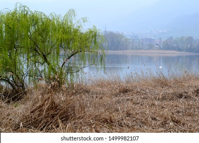 Beautiful panoramic spring view to the lake Garlate near Lecco with dry grass field at the lakefront and green willow trees in a cloudy day.