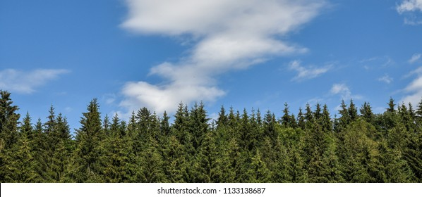 Beautiful panoramic view of firs and larches coniferous forest against blue sky with clouds. Summertime in the Styria mountains in Austria.