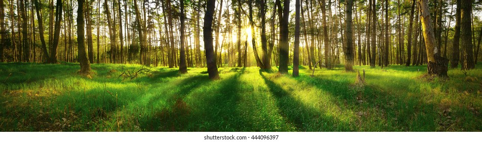 Beautiful panoramic view of forest at sunset