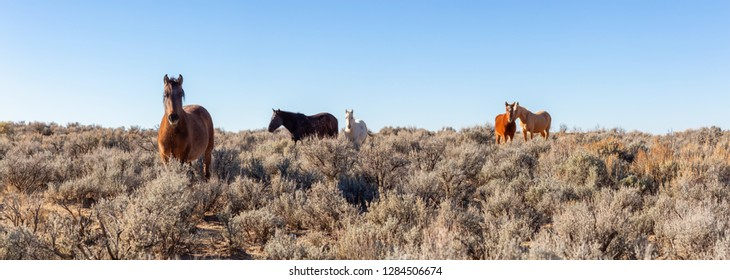 Beautiful panoramic view of a group of Wild Horses in the desert of New Mexico, United States of America.