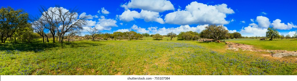 Beautiful panoramic view of a Texas Hill Country ranch with bluebonnets and oak trees on a sunny day.