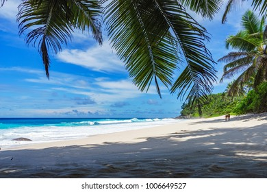 beautiful paradise beach with palm trees, granite rocks, white sand and turquoise water at anse bazarca, seychelles