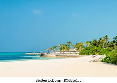 Beautiful paradise beach with tall palm trees on a background of blue sky