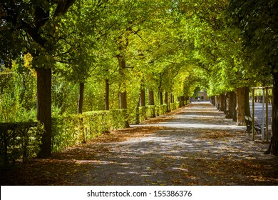 Beautiful park alley in autumn