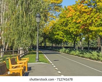 Beautiful park in autumn summer day