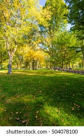 Beautiful park in beautiful city.  The Mall area in Central Park at autumn. New York City, USA