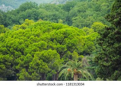 beautiful park with decorative coniferous trees