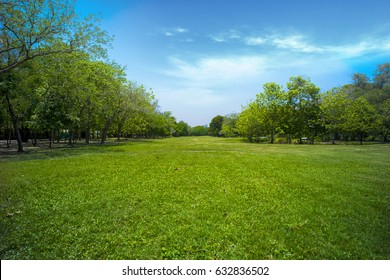 Beautiful park  with green grass field, green tree plant and a party cloudy blue sky