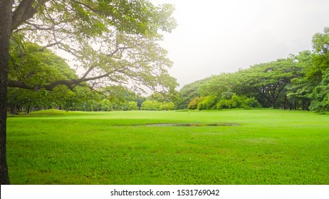 Beautiful park scene in public park with green grass field, green tree plant and soft sunlight.