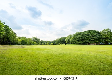 Beautiful park scene in public park with green grass field, green tree plant and a party cloudy blue sky