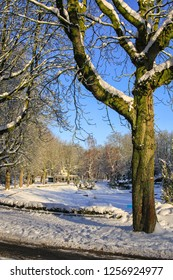 Beautiful park in the snow