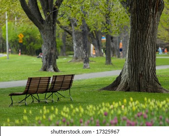 Beautiful park in spring