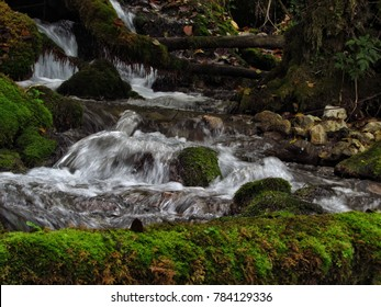Beautiful park stream