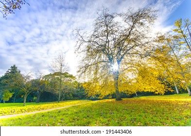 Beautiful park tree with sunrays through the autumn colored leafs in London, England