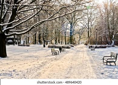 Beautiful park in winter