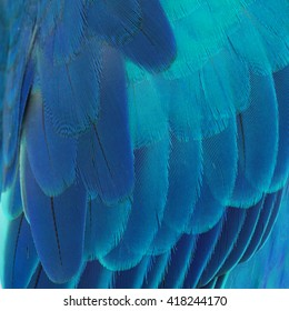 Beautiful Parrot Feathers