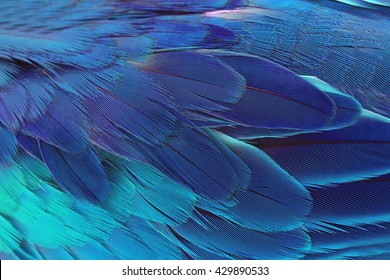 Beautiful Parrot Feathers background