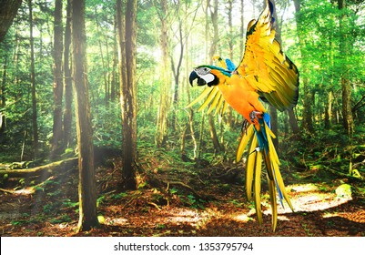 Beautiful parrot (Macaw Parrot) flying in the forest, photo blurred.
